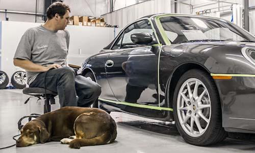 Pets At Work - Northwest Auto Salon