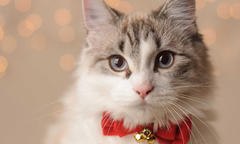 5 holiday safety tips for pets