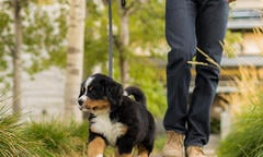 how-to-train-a-puppy-list