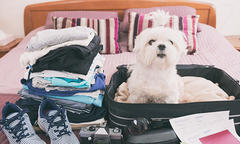 dog sitting in a suitcase on a bed