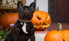 purina_halloween safety tips for pets_500x300.jpg