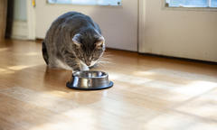 Wet vs Dry Cat Food list