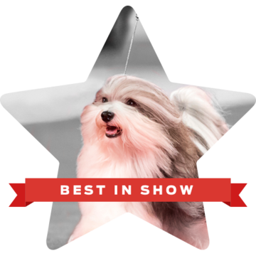beverly-hills-dog-show-best-in-show-bono