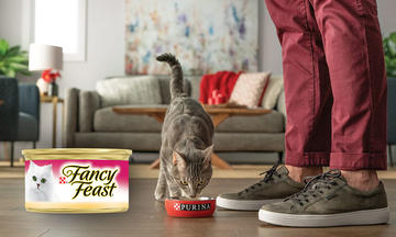 purina-fancy-feast-cat-food-review