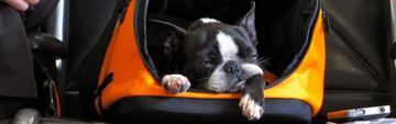 Safety Tips for Flying with Your Dog
